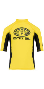 2018 Animal Junior Boys Hiltern Short Sleeve Rash Vest Bright Yellow CL8SN610