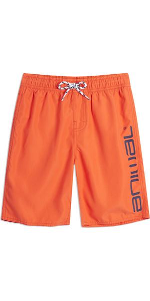 2019 Animal Junior Tanner Board Shorts Firecracker Orange CL9SQ600